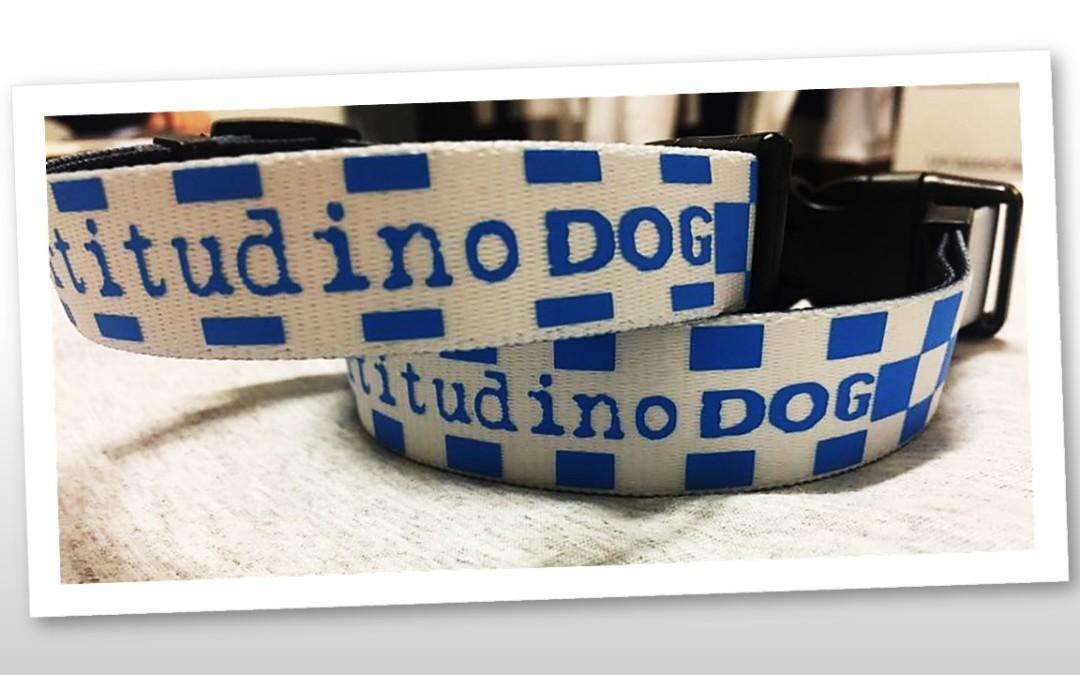 """Collare """"Fortitudino DOG"""""""